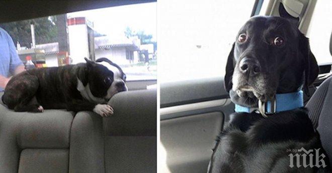 Тези домашни любимци нямаха никаква идея, че отиват на ветеринар. Тяхната реакция? Безценна!