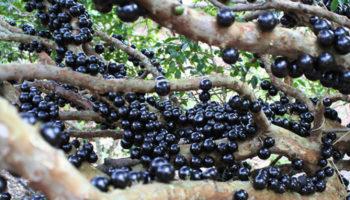 Това са най-странните плодове и зеленчуци на света (снимки)